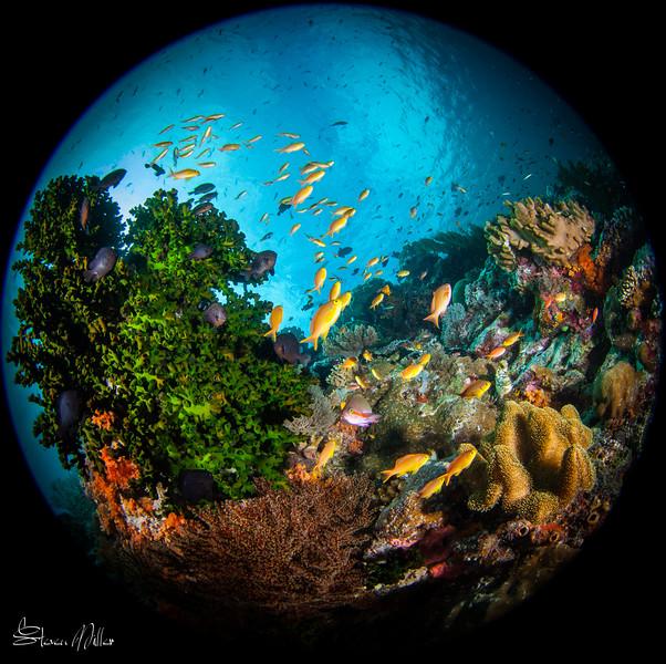 Fisheye lenses and tiny fish