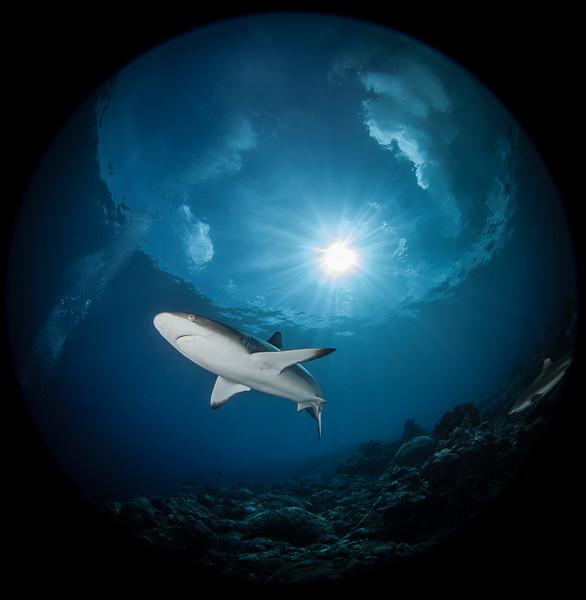 Starburst shark