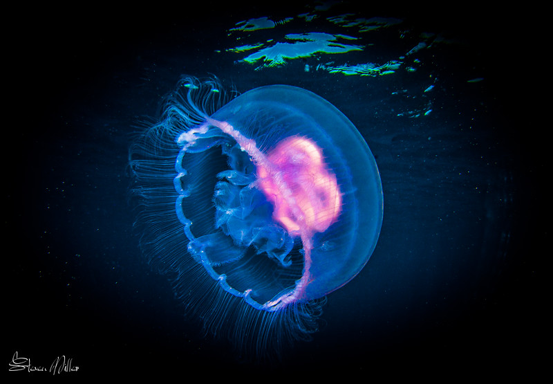 Everything you need to know about Jellyfish shooting