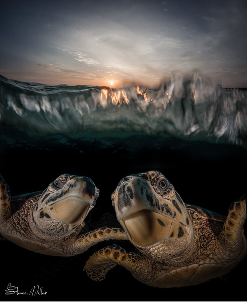 Sunset Turtle Composite