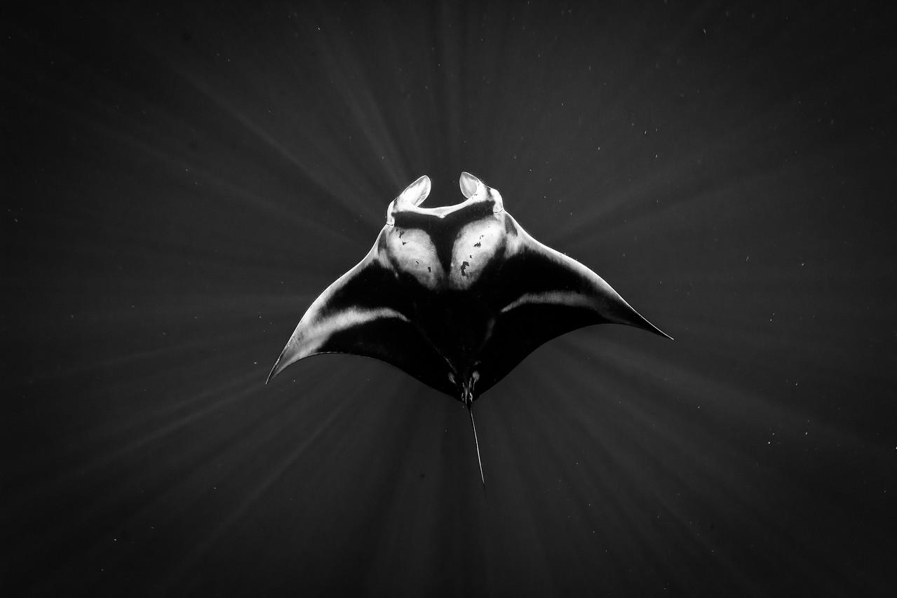 Space Manta
