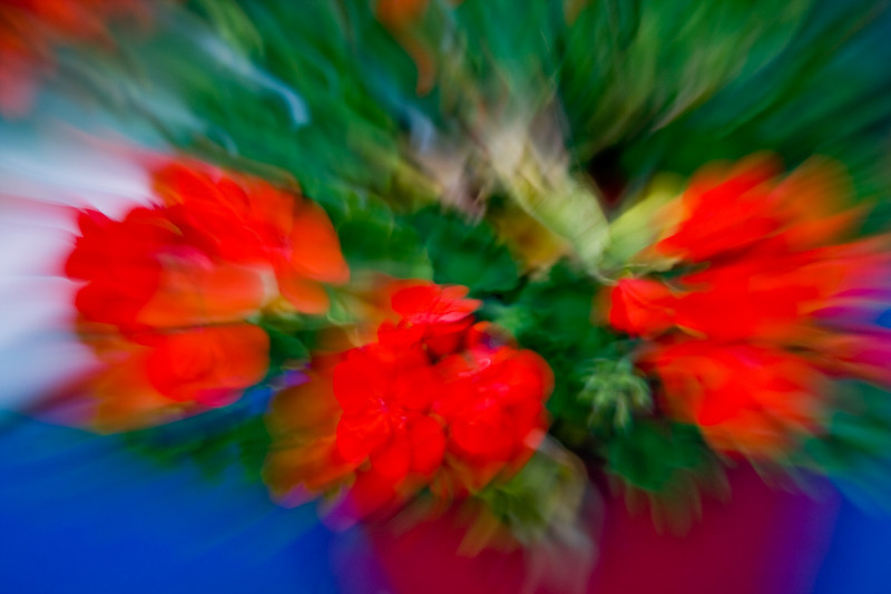 Day 06 - Zooooomlens  1/8 sec - zooming in on a geranium on the gardentable