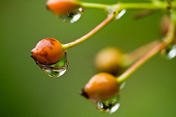 Day 14 - Raindrops keep falling
