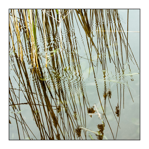 Day 04 Reed  It was an overcast day with almost no wind. But if you waited long enough, you could see signs of life, fish swimming through the reed bush leaving only ripples as evidence. Ripples that added a nice distortion to the reflections.