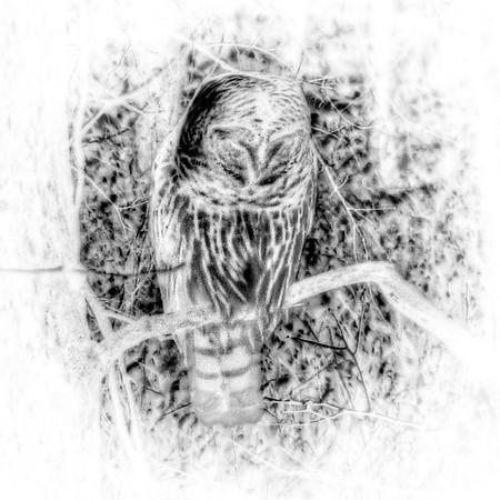 Owl Invert sqr