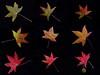 final version - Shades of Fall