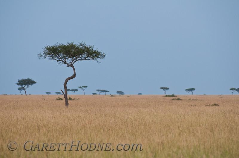 Masai Mara National Preserve, Rift Valley, Kenya
