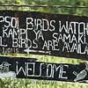 All birds area Available!