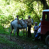 Costa Rican family picnic along a trail near