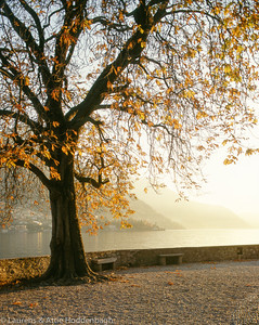 Autumn tree at the Lago di Garda  Filename: ITA-100019-002.jpg