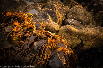 Seaweed at Beach of Carmel at sunset