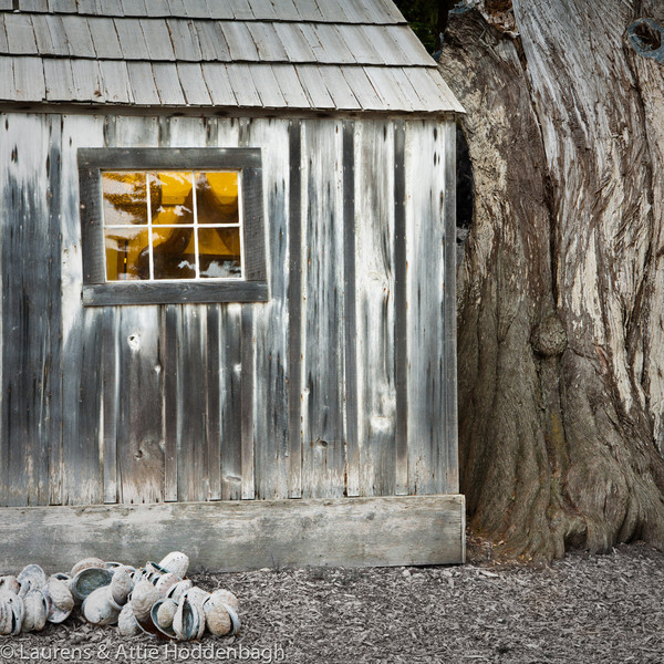Old Shed and tree at State Park Point Lobos near Carmel, california, USA  Filename: CEM010845-Carmel-CA-USA.jpg