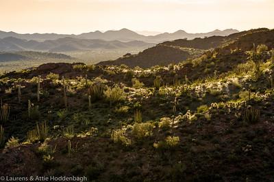 Organ Pipe Cactus National Monument Arizona USA  Filename: CEM004527-Organ_Pipe_Cactus_NM-AZ-USA-2.jpg