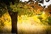 "Fall in Capitol Reef Nat'l Park, Utah  <div class=""ss-paypal-button"">Filename: CEM010202-CapitolReef-UT-USA.jpg</div><div class=""ss-paypal-button-end"" style=""""></div>"