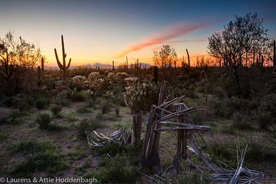 North Kinney Rd, Saguaro Nat'l Park