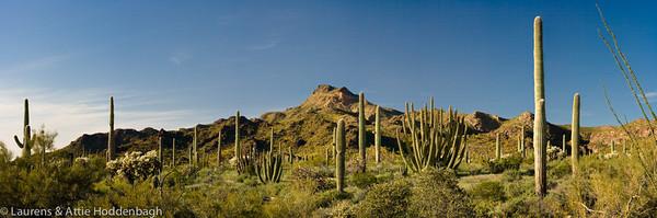 Organ Pipe Cactus National Monument  Filename: CEM004519-24-Organ_Pipe_Cactus_NM-AZ-USA-Edit.jpg