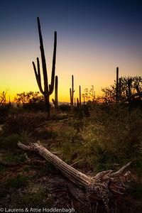 Sunset at Saguaro National Park, AZ