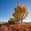 Fall at Bishop, CA