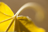 "Autumn leaf  <div class=""ss-paypal-button"">Filename: CEM007602-AutumnLeaves-CA-USA.jpg</div><div class=""ss-paypal-button-end"" style=""""></div>"