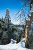 Iced trees near Idyllwild, CA