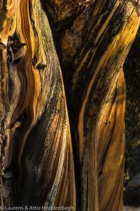 Bristlecone Pine Forest, CA