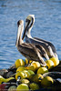 Pelicans in Los Angelos Harbor  Filename: CEM007647-LosAngeles_Harbor-CA-USA-Edit.jpg