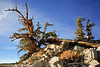 Bristlecone Pine Forest, CA  Filename: CEM007087-BristleconePineForest-CA-USA-Edit.jpg