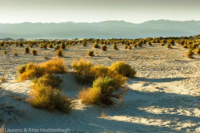 Devils Corn Field, Death Valley, California  Filename: CEM007541-DeathValley-DevilsCornfield-CA-USA.jpg