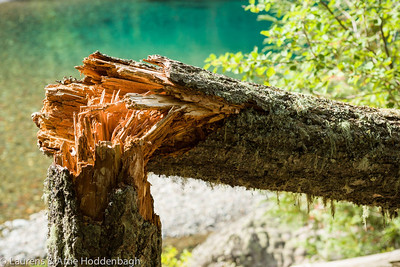 Broken tree at Mc Donald Creek