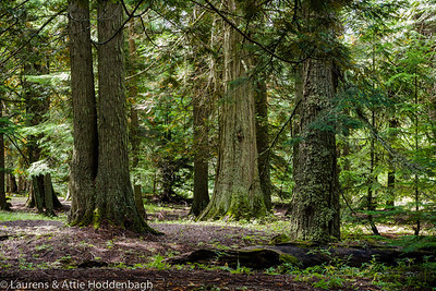 Trail of the Cedars, Glacier National Park, Montana  Filename: CEM06422-GlacierNP-MT-USA.jpg