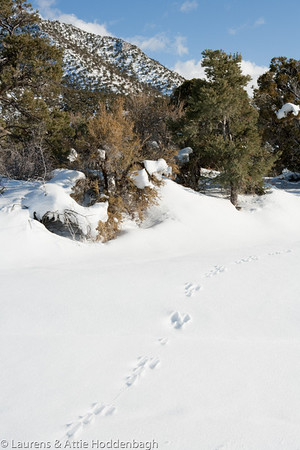Area around Pahrump, covered with snow  Filename: CEM007981-Pahrump-NV-USA.jpg