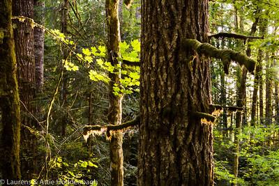Forest in Stub Stewart State Park