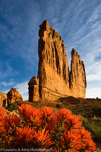 Indian Paintbrush near Courthouse Towers, Arches NP, Utah