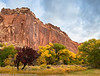 Fall in Capitol Reef Nat'l Park
