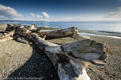 Driftwood at Fay Bainbridge State Park