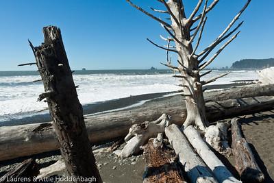 Driftwood at Rialto Beach at Olympic Nat'l Park