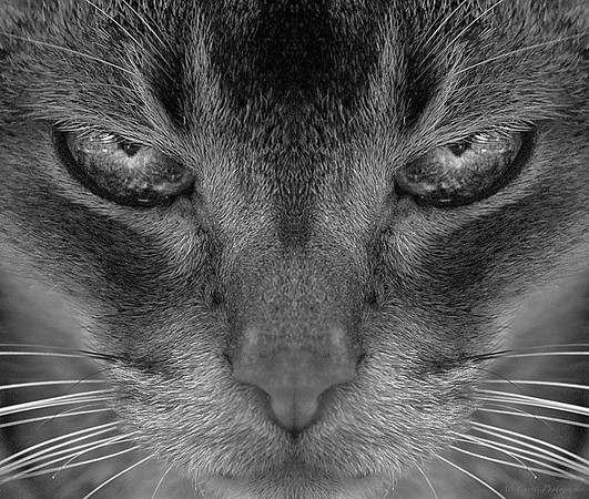 Evil Kitty<br /> <br /> Awarded Second place in the 2012 OC Fair.