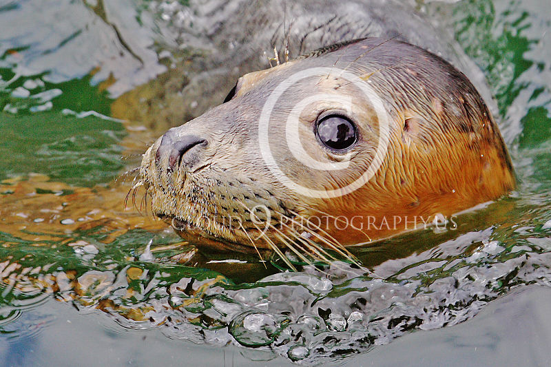 AN - Seal 00023 by Tony Fairey