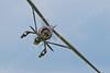 WB - Westland Lysander 00076 Westland Lysander British RAF by Tony Fairey