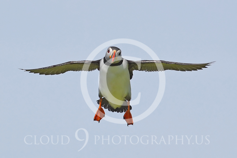 AN - Puffin 00014 by Tony Fairey