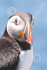 AN - Puffin 00040 by Tony Fairey