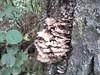 IMG_20120825_110410