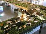 wood decay fungi
