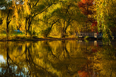 Hall's Pond, Brookline, Massachusetts