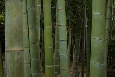 Bamboo - Sankeien Gardens Yokohama,  Japan