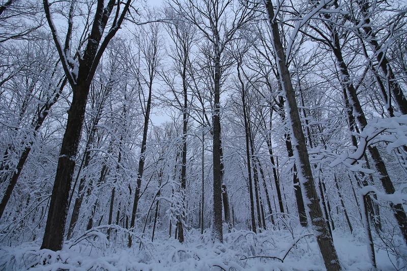 feb-snow-day-01