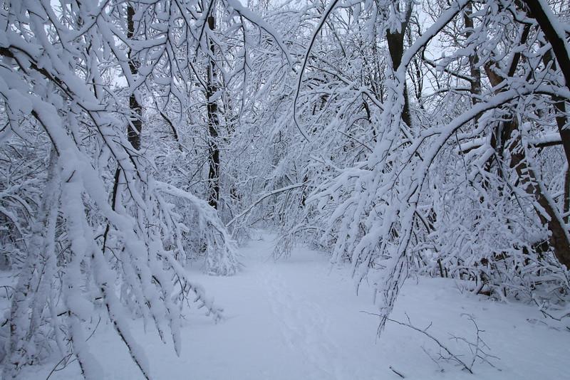 feb-snow-day-12