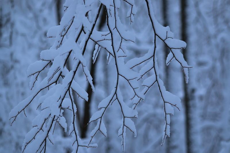 feb-snow-day-11