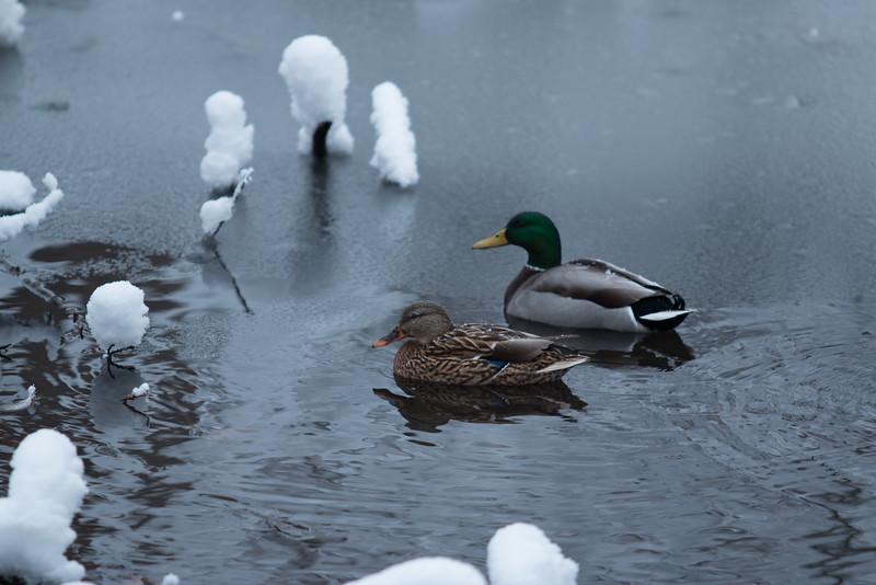 feb-snow-day-bw-13