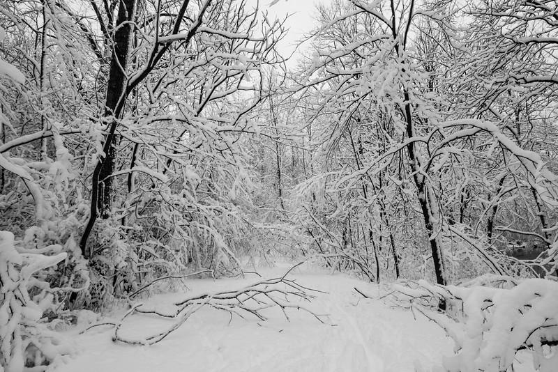 feb-snow-day-bw-16